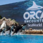 SeaWorld's New Orca Encounter and More! {Sponsored Post}