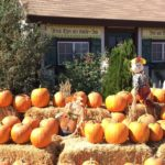 SoCal Hidden Gem – Big Horse Corn Maze