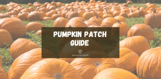 pumpkin guide featured