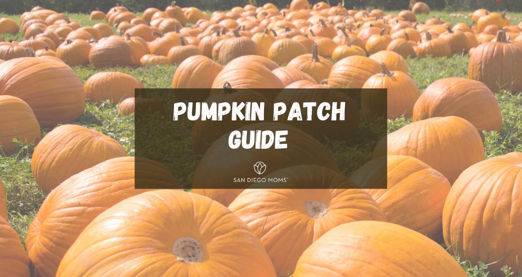 pumpkin guide featured