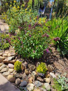Beautiful Garden Ideas are All Around
