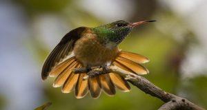 An emerald hummingbird sitting on a tree branch